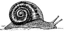 bandw snail